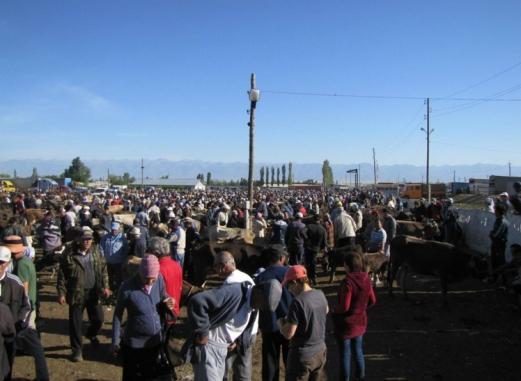 Karakol Cattle Market 1