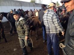 Karakol Cattle Market 12