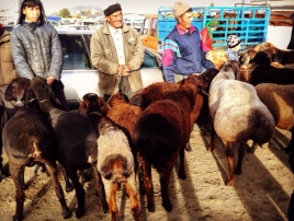 Karakol Cattle Market 13