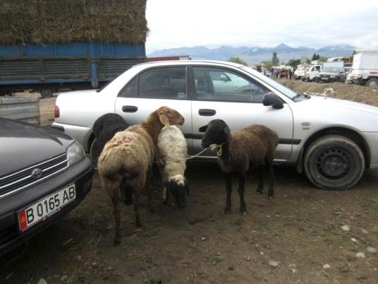 Karakol Cattle Market 18