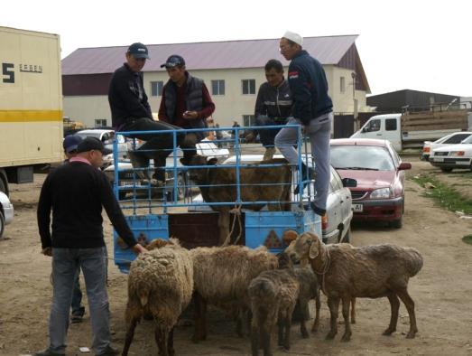 Karakol Cattle Market 2