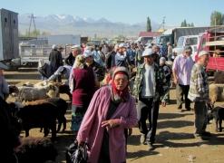 Karakol Cattle Market 20