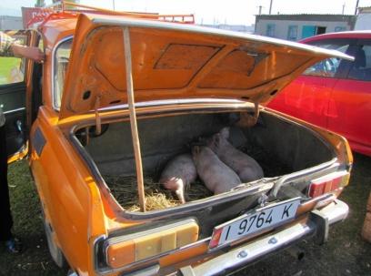 Karakol Cattle Market 21