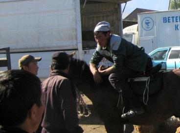 Karakol Cattle Market 22