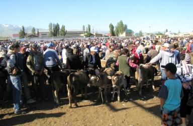 Karakol Cattle Market 23