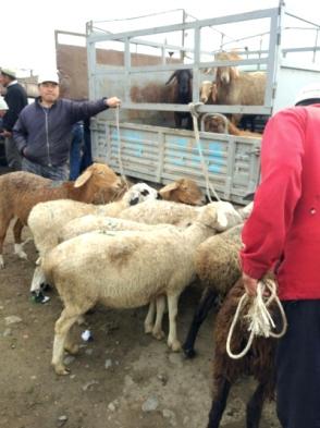 Karakol Cattle Market 4