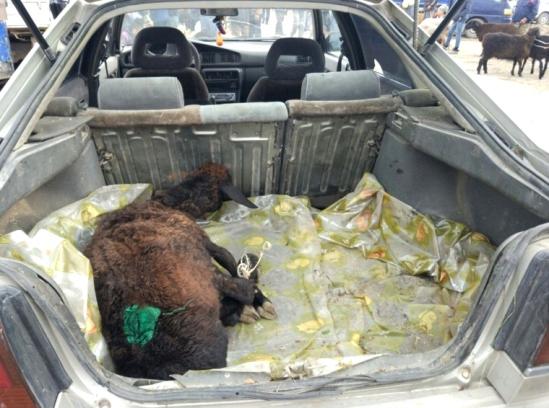 Karakol Cattle Market 5