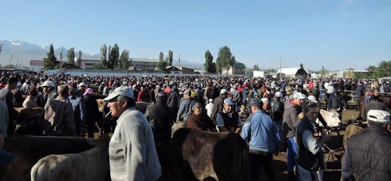 Karakol Cattle Market 8