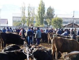 Karakol Cattle Market 9